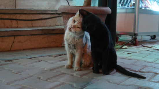 Alley Cat Amour in Hurghada, Egypt.