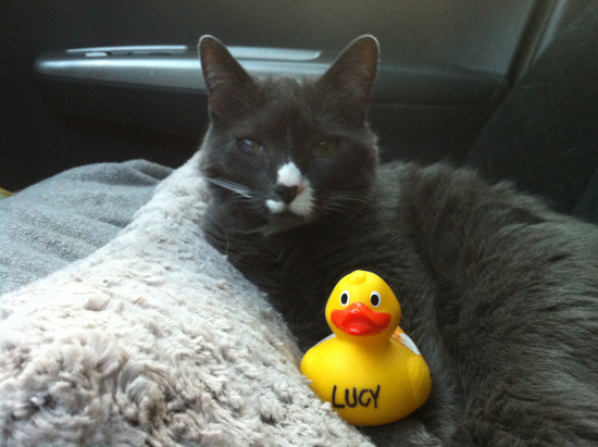 Cato Cat and Lucy Duck road tripping across Canada.