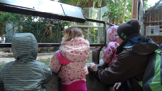 Our monkeys checking out one of the primate exhibits.