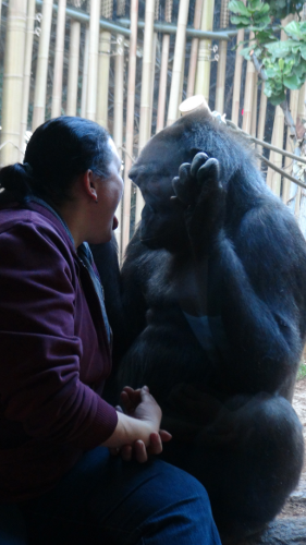 This zoo patron seemed to visit often enough to be on a first name basis with this gorilla.