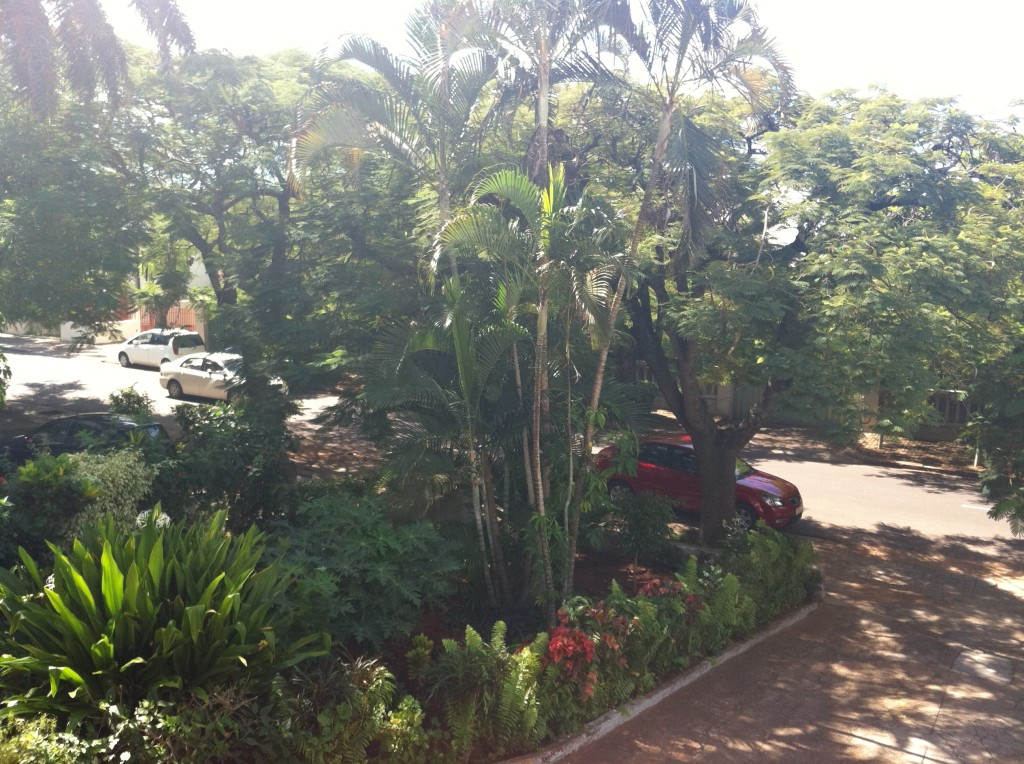 The tropical plant life in Maputo was fun to look at.