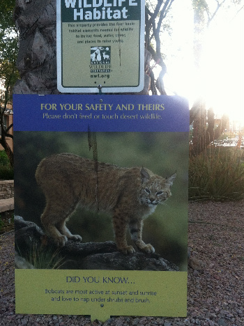 Bobcat's Live Here Too!