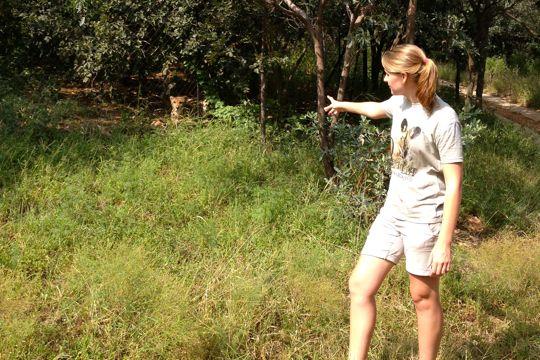 Our guide at the Ann van Dyk Cheetah Centre, pointing out a cheetah.