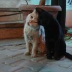 Hurghada Feline Amour