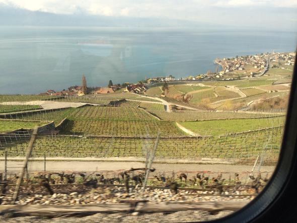 Vineyards on Lake Geneva, Switzerland
