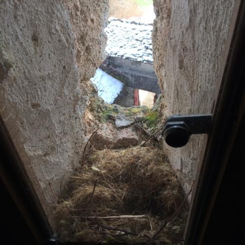 Birds nest in Gruere Castle, Switzerland