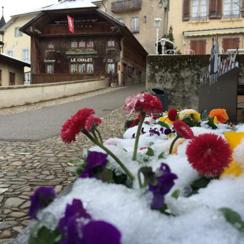 Snow Flowers in Old Town Gruyere, Switzerland