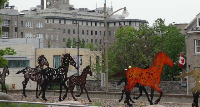 Horses outside the National Gallery of Canada