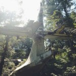 Hiking the Tofino Bomber Trail