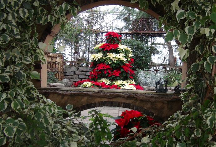Christmas at the Royal Botanical Gardens