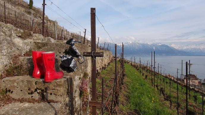 Terraced vineyards of Lavaux, Switzerland