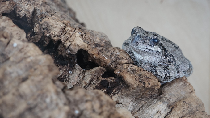 A True Toad at the Royal Botanical Gardens in Burlington, Ontario