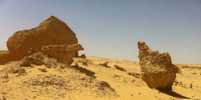 Fossilized Mangroves in Egypt's Valley of the Whales.