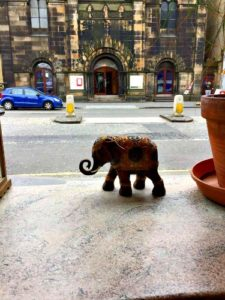 A wee elephant at The Elephant House