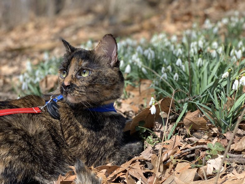 Spring Walks with a cat